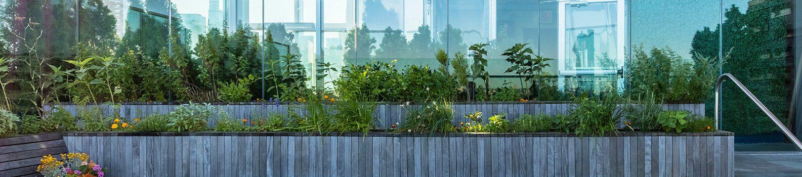 Rooftop garden plantings.